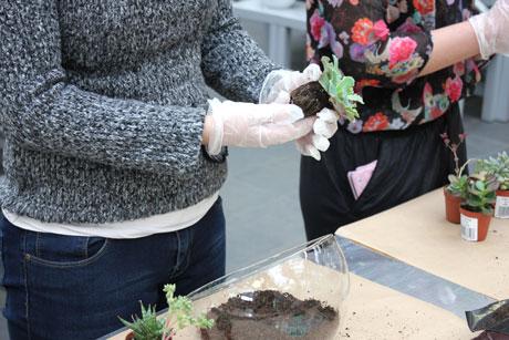 succulente1