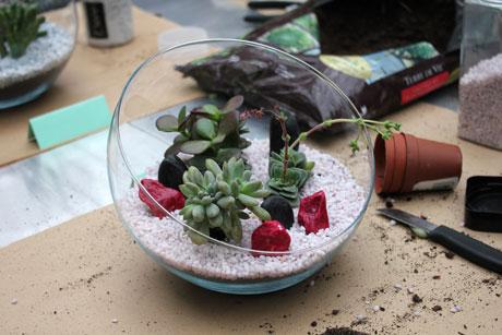 succulente4